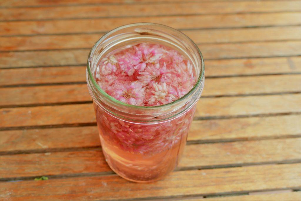 Schnittlauchblüten Essig Herstellung